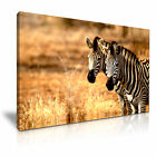 NEW ANIMAL Zebra 15 Canvas Framed Printed Wall Art ~ More Size