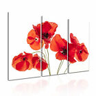 FLOWER Poppy 8 Canvas 3A Framed Printed Wall Art ~ 3 Panels