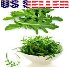 250+ ORGANICALLY GROWN Arugula Rocket Seeds Rucola Roquette Heirloom NON-GMO USA
