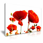 Red Poppy Flower Modern Wall Art Canvas Print Framed Box ~ Many Sizes & Style