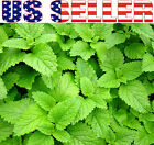 100+ ORGANICALLY GROWN Lemon Balm Melissa Heirloom NON-GMO Fragrant From From US