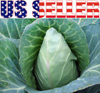 100+ ORGANICALLY GROWN Early Jersey Wakefield Cabbage Seeds Heirloom NON-GMO USA