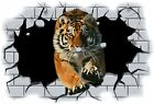 Huge 3D Tiger Crashing through wall View Wall Sticker Mural Decal Film 57
