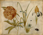 "Hans Hoffmann : ""Flowers and Beetles"" (1582) — Giclee Fine Art Print"