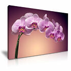 FLOWER Orchid Canvas Framed Printed Wall Art 15 ~ More Size