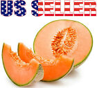30+ ORGANICALLY GROWN Hale's Best Jumbo Musk Melon Seeds Heirloom NON-GMOTasty!