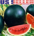 25+ ORGANICALLY GROWN Sugar Baby Watermelon Seeds Heirloom NON-GMO Sweet From US