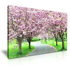 CHERRY BLOSSOM Path Park Canvas Wall Art Picture Print ~ More Size