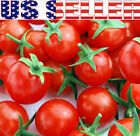 50+ ORGANICALLY GROWN Small Red Cherry Sweet Tomato Seeds Heirloom NON-GMO