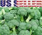 100+ ORGANICALLY GROWN De Cicco Broccoli Italian Broccoli Seeds Heirloom NON-GMO