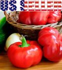 30+ ORGANICALLY GROWN Alma Paprika Sweet Pepper Round Seeds Heirloom NON-GMO USA