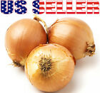 100+ ORGANICALLY GROWN GIANT Walla Walla Sweet Onion Seeds Heirloom NON-GMO Mild