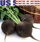150+ ORGANICALLY GROWN Black Spanish Round Radish Seeds Heirloom NON-GMO RARE!