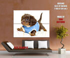 Small Cute Puppy Pullover Dogs Gigantic Print POSTER