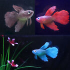 Artificial Soft Silicone Glowing Betta Effect Aquarium Fish Tank Ornament Decor