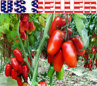 30+ ORGANICALLY GROWN Italian Scatolone Pomodoro Tomato Seeds Heirloom NON GMO
