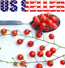 30+ ORGANICALLY GROWN Worlds Smallest Spoon Currant Tomato Seed Heirloom NON-GMO