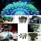 Factory Wholesale 10/20/50/100/200 pcs Natural Color Peacock Eye 10-12 Inches