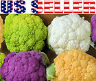 50+ ORGANICALLY GROWN Cauliflower MIX Seeds Heirloom NON-GMO Purple Green Yellow