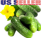 20+ ORGANICALLY GROWN Parisian Pickling Cucumber French Gherkin Seeds Heirloom