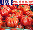 15+ ORGANICALLY GROWN Beauty Lottringa Red Tomato Seeds Heirloom NON-GMO French