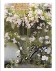 """MICHAEL ANCHER """"Climbing Roses"""" print ON CANVAS choose SIZE, from 55cm up, NEW"""