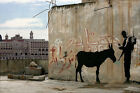 CANVAS Soldier With Donkey by Bansky 36x24 Giclee Gallery Wrap Home Decor