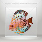 Stickers Sticker Fish Royal Red Discus Freshwater aquarium car st7 26759
