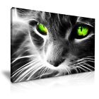 Green Eyes Cat Canvas Wall Art Picture Print Decoration 5 Sizes Choose