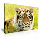 Tiger Canvas Wall Art Picture Print Decoration 5 Sizes Choose