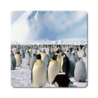 Penguins - Oversized Rubber Coasters Set of 4 or 6