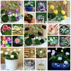 NEW! Hydroponic Flowers Small Water Lily Seeds, Mini Lotus Seeds - 10 Seeds