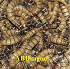 250 to 4,000  Small Live Superworms Free Shipping!