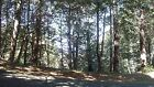 Beautiful Shelter Cover Lot - 13,000 sq ft. - Humboldt County, CA