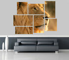 Lion in the Jungle Removable Self Adhesive Wall Picture Poster 1180
