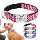 Medium Large Personalized Dog Collar with Name Plate Engrave Phone Metal Buckle