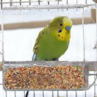 Seed No Mess Bird Feeder Parrot Toys Useful Canary Cockatiel Finch Tidy Corral