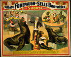 Photo Printed Old Poster: Circus Performer Flyer 1800s Forepaugh Sells Brothers