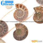 25-30mm Gemstone Conch Fossil DIY Loose Beads for Jewelry Making Strand 7 Pcs