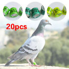 20Pcs 2019 leg Rings GB Rings Plastic Pigeon Bands New Dove Training Supplies