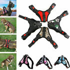 Small Black Dog Puppy Harness Poodles Rottweilers Corgi Sale