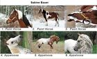 LOT OF 6 HORSE POSTCARDS APPALOOSA PAINT HORSE SABINE BAUER 2010 ALL ARE NAMED