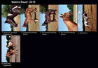 LOT OF 6 HORSE POSTCARDS DIFFERENT BREEDS SABINE BAUER 2016 ALL ARE NAMED
