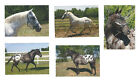 LOT OF 5 HORSE POSTCARDS APPALOOSA SABINE BAUER 2017 ALL ARE NAMED