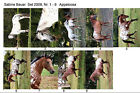 LOT OF 9 HORSE POSTCARDS APPALOOSA SABINE BAUER 2009 ALL ARE NAMED
