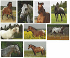 LOT OF 10 HORSE POSTCARDS APPALOOSA SOME ARE NAMED