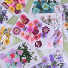 Pressed flower mixed organic natural dried flowers diy art floral decors giWTUS