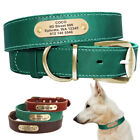 Custom Dog Collar Leather Personalized Brass Name Plate Small Medium Large Dogs