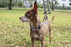 """Lupine 1/2 Inch Width Small Dog Snap Collars in 6-9"""", 8-12"""" and 10-16"""""""