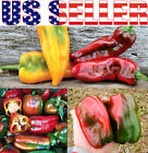 30+ ORGANICALLY GROWN Napoleon Sweet Pepper Seeds RARE Heirloom NON-GMO From USA